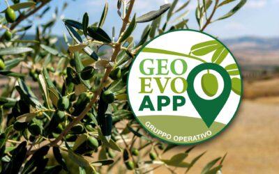 Cultura olivicola. Con GeoEvo App alla scoperta di Americano e Gentile di Anghiari